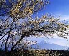 Free Mt Fuji-473 Royalty Free Stock Photos - 4612768