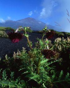 Free Mt Fuji-470 Stock Photo - 4612770