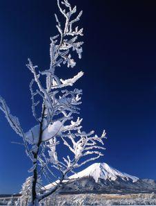 Free Mt Fuji-466 Stock Photography - 4612782
