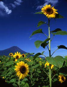 Free Mt Fuji-461 Stock Image - 4612791