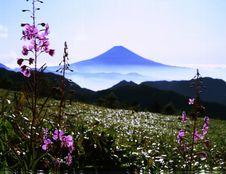 Free Mt Fuji-456 Royalty Free Stock Photo - 4612805