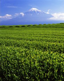 Free Mt Fuji-442 Royalty Free Stock Images - 4612869