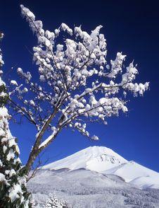 Free Mt Fuji-429 Stock Photography - 4612912