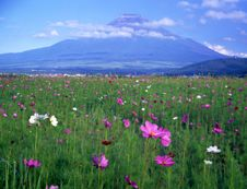 Free Mt Fuji-422 Stock Images - 4612944