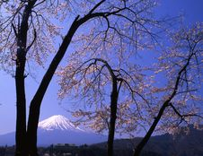 Free Mt Fuji-418 Stock Photos - 4612953