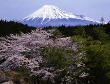 Free Mt Fuji-416 Royalty Free Stock Images - 4612959