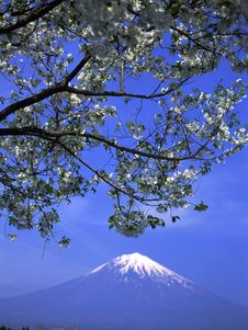 Free Mt Fuji-412 Royalty Free Stock Photos - 4612968