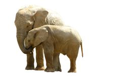 Free African Elephants Royalty Free Stock Image - 4615446