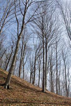 Free Beech Tree Stock Photos - 4615483