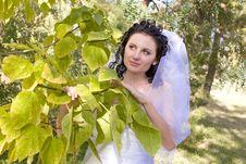 Free Bride Near The Tree Royalty Free Stock Photo - 4616695