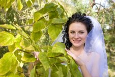 Smiling Bride By The Green Tree Stock Image