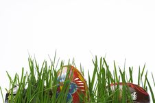 Free Easter Eggs In Grass Royalty Free Stock Photo - 4618275