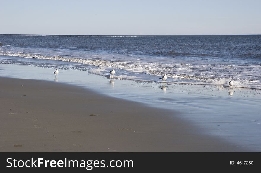Four Gulls in the Surf