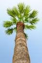 Free Palm Tree Stock Image - 46183641