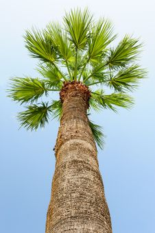 Free Palm Tree Stock Image - 46183641
