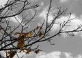 Free Autumn Foliage Royalty Free Stock Images - 4629259