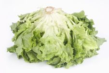 Free Green Lettuce Royalty Free Stock Photos - 4620698