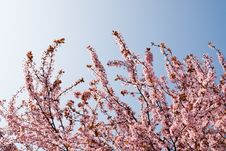 Free Spring Time Stock Images - 4622284