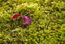 Shoot In The Moss Royalty Free Stock Images