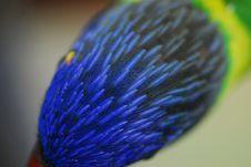 Free Close Up Of Parakeet 1 Stock Photos - 4623293