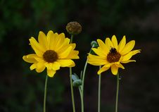 Free Yellow Flowers Stock Photos - 4624423