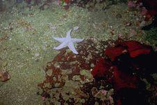 Underwater Life Of Kuril Islands Stock Image