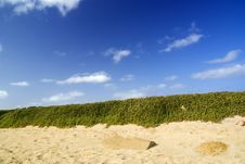 Beach With Plants. Royalty Free Stock Photos