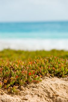Free Plants On Beach. Royalty Free Stock Photography - 4626487
