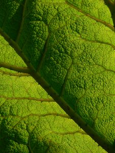 Free Textured Leaf Royalty Free Stock Images - 4626699