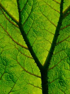Free Textured Leaf Stock Images - 4627184