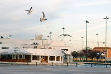 Free Flying Seagull In Lisbon Stock Images - 4627224
