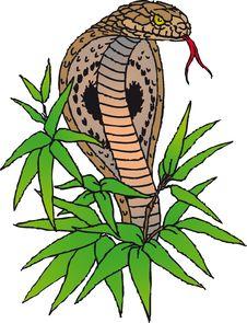 Free Cobra Royalty Free Stock Images - 4628429