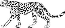 Free Ghepard Royalty Free Stock Images - 4628649