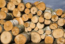 Pile Of Birch Logs Royalty Free Stock Image