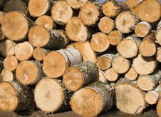 Pile Of Birch Logs Stock Photo