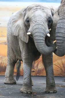 Free Elephant Hug Stock Images - 4629764