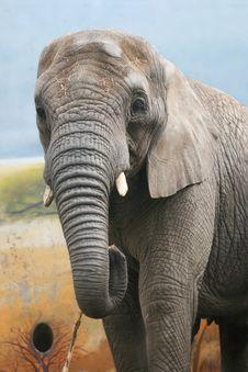 Free Giant Elephant Royalty Free Stock Photography - 4629837