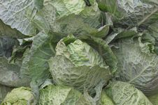 Group Green Cabbage For Background Royalty Free Stock Photo