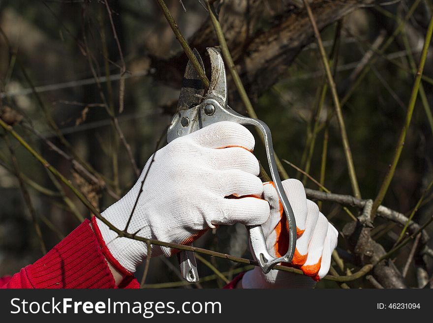 Pruning in bright gloves