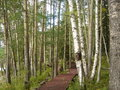 Free Small Passage Into The Woods Stock Image - 4637741