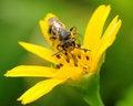 Free Bee On Yellow Flower Stock Image - 4638021