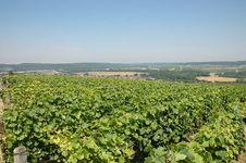 Free Vineyards Royalty Free Stock Photo - 4630495