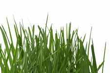 Free Grass Royalty Free Stock Images - 4630979