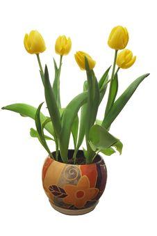 Free Tulips Stock Image - 4631071