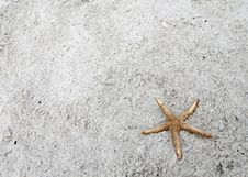 Free Starfish On Beach Royalty Free Stock Photo - 4631395