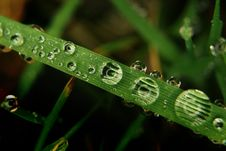 Free Grass Covered By Dewdrops Stock Photo - 4631620