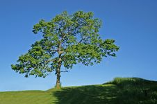Free Tree On Hill Stock Photo - 4631800
