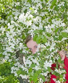 Girl Hiding In The Spring Apple Flowers Royalty Free Stock Photography
