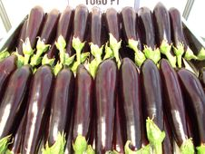 Free Aubergine Royalty Free Stock Images - 4632799