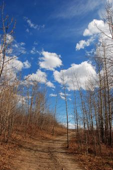 Free Clouds Above Woods Royalty Free Stock Photo - 4633085